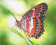 St. Louis Drawings Posters - Malay Lacewing Poster by Denise Howard