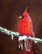 Singing Pastels Originals - Male Cardinal by Adam Johnson