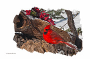 Randall Branham Posters - Male Cardinal On Stump Poster by Randall Branham