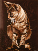 Hyper Framed Prints - Male cat Framed Print by Konstantinos-Pimba Botas