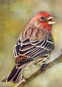 Debbie Portwood Prints - Male House finch - Digital Paint Print by Debbie Portwood