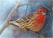 Debbie Portwood Prints - Male Housefinch close view Print by Debbie Portwood
