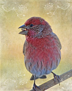 Greetingcard Posters - Male housefinch with corner decorations Poster by Debbie Portwood
