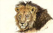 Nature Study Painting Posters - Male lion Poster by Juan  Bosco