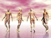Muscular Digital Art Posters - Male Muscular System From Four Points Poster by Elena Duvernay