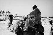 Camel Photo Metal Prints - male tourist in desert clothing being led on the back of a camel into the sahara desert at Douz Tunisia Metal Print by Joe Fox
