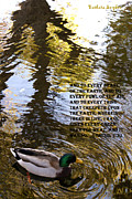 Scriptures Posters - Mallard Duck With Scriptures Poster by Barbara Snyder