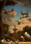 Garden Scene Prints - Mallard Golden Eagle Wild Fowl in Flight Print by Melchior de Hondecoeter