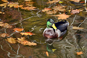 Ann Bridges - Mallard Magic