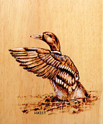 Pond Pyrography Framed Prints - Mallard Framed Print by Ron Haist