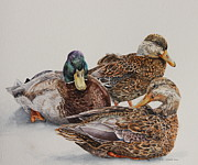 Sitting Ducks Framed Prints - Mallard Trio Framed Print by Helen Shideler