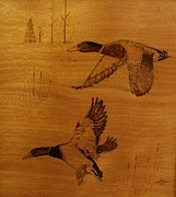 Waterfowl Pyrography Prints - Mallards flying overhead Print by Ed Cress