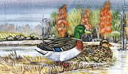 Waterfowl Paintings - Mallards In The Snow by Kay Sparks