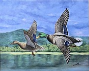 Mallards Paintings - Mallards by Olga Wing
