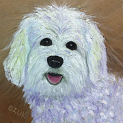 White Maltese Originals - Maltese by Karen Zuk Rosenblatt