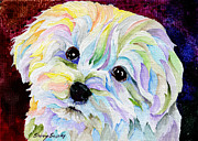Maltese Dog Posters - Maltese Poster by Sherry Shipley