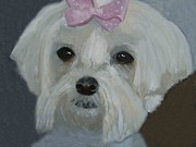 Maltese Dog Posters - Maltese with Pink Bow Poster by Angela Inguaggiato