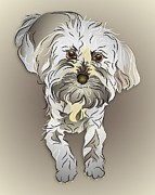 Mutts Digital Art - Maltipoo by MM Anderson
