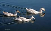 Susan Wiedmann - Mama Duck Leads The Way