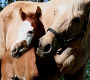 Horses Pyrography Prints - Mamas Love Print by Lisa Browning