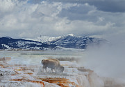 Joseph J Stevens - Mammoth Hot Springs at...