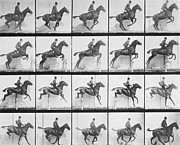 Black And White Photos Prints - Man and horse jumping a fence Print by Eadweard Muybridge