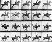 Black And White Horse Framed Prints - Man and Horse jumping Framed Print by Eadweard Muybridge