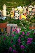 Manarola Flowers And Houses Print by Inge Johnsson