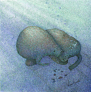 Square Art Drawings - Manatees by Wayne Hardee