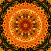 Stuart Turnbull Metal Prints - Mandala 69 Metal Print by Stuart Turnbull