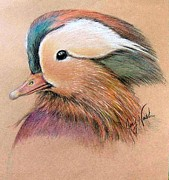 Mandarin Drawings - Mandarin Duck by Joey Nash