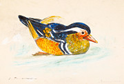 Chalk Drawing Metal Prints - Mandarin duck Metal Print by Kurt Tessmann