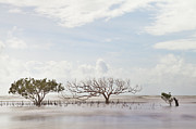 Loneliness Photos - Mangrove Tree In Blurred Sea by Dirk Ercken