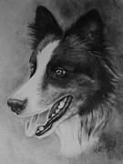 Border Collie Drawing Posters - Mans Best Friend Poster by Aubrey Campbell