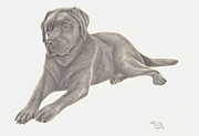 Chocolate Lab Drawings - Mans Best Friend by Patricia Hiltz