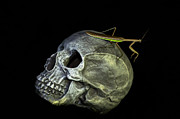 Dazz DeLaMorte - Mantis on Skull 1
