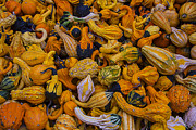 Garry Gay - Many Colorful Gourds