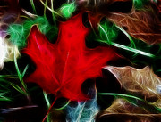 Fractalius Framed Prints - Maple Leaf Art Framed Print by Kami McKeon