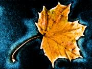 Pop Art Photos - Maple Leaf by Bob Orsillo