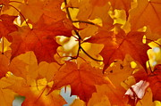 Andrea Kollo Metal Prints - Maple Leaves  Metal Print by Andrea Kollo