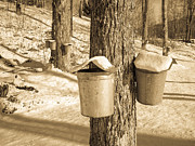 Vermont Posters - Maple Sap Buckets Poster by Edward Fielding