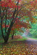 Vibrancy Prints - Maple tree Avenue in Autumn  Print by Richard Thomas