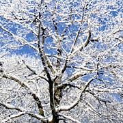 Patricia Sundik - Maple Tree Blue Sky...