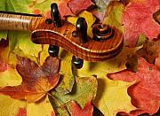 Violin Prints - Maple Violin Scroll on Fall Maple Leaves Print by Anna Lisa Yoder