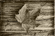 LeeAnn McLaneGoetz McLaneGoetzStudioLLCcom - Maple Wood