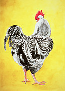 Yellow Beak Painting Metal Prints - Maran Cockrel Metal Print by Jeanne Maze