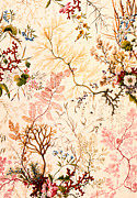 Wild Flower Drawings - Marble end paper  by William Kilburn
