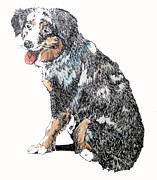 Sheepdog Drawings - Marble by Michael Angelo OConnell