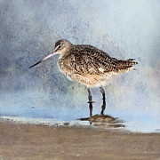 Marbled Posters - Marbled Godwit Poster by Betty LaRue
