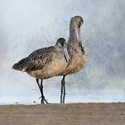 Marbled Posters - Marbled Godwit Pair Poster by Betty LaRue